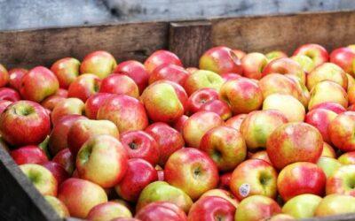 Proeftuin Randwijk levert geregeld fruit